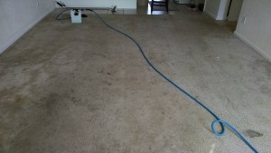 A-5 Star Carpet Care